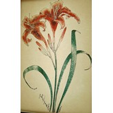 Day Lily Vintage Transfer