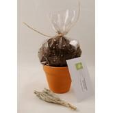 Sage Seed Planting Set